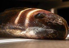 Luces en la evaluación de la calidad del pescado