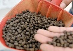 Salmofood busca fortalecer a la industria del salmón desde el alimento