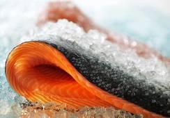 Precio del salmón noruego baja nuevamente