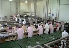 Chiloé: piden investigar nuevos contagios de covid-19 en planta salmonicultora
