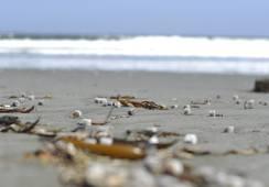 Mar Brava: Comunidad denuncia contaminación de playa con biomedios