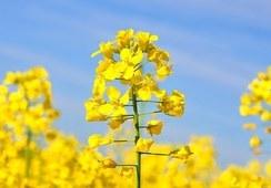 Cargill trabaja en nuevo aditivo para alimentos con omega 3