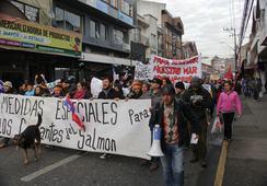 Invitan a jornada de solidaridad para ex trabajadores de salmonicultoras