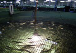 Presentan proyecto para construir piscicultura de flujo abierto en comuna de San Pablo