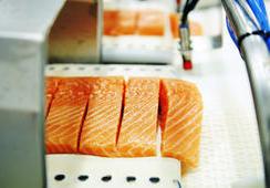 Exportaciones de salmón noruego subieron en septiembre