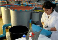 Aquadvise planea expandir bioensayos a nuevas especies