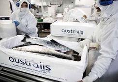 Australis aprueba aumento de capital de US$ 40 millones
