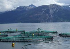 Aquaculture innovators chosen for London showcase
