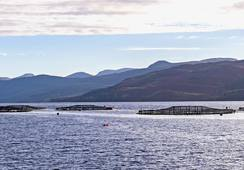 Scotland's salmon farmers appeal for priority access to Channel crossings