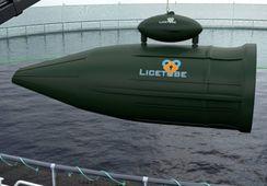 Utsetter testing i Austevoll grunnet alger