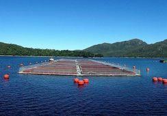 Agrosuper: Segmento acuícola incrementa utilidades en 2017
