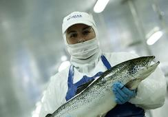 Profits rise for Chilean salmon farmers