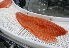 Enero: Exportaciones de salmón a EE.UU manifiestan un crecimiento interanual de 22,9%
