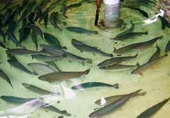 Febrero: SEIA aprueba dos proyectos en Pesca y Acuicultura