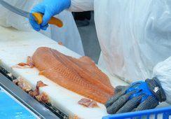 A febrero: volumen de envíos de salmón Atlántico aumenta en 33,7%
