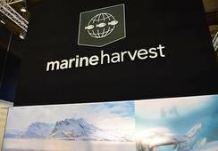 T1: Marine Harvest disminuye en 30% su volumen de producción respecto del 2017