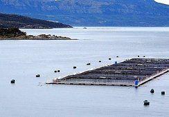 Ley Lafkenche: 41 concesiones marítimas en estado de renovación se encuentran suspendidas