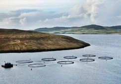 Grieg Shetland stabilises after 'challenging' 2017