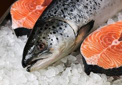 Febrero: Exportaciones de salmón a Rusia manifiestan un crecimiento interanual de 67%,