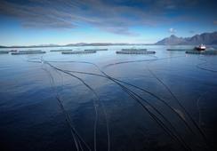 Ny bærekraftsrapport for havbruk