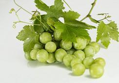 Quitosano y extracto de semilla de uva: recubrimiento para aumentar la vida útil de filetes