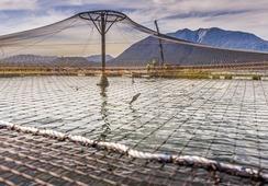 Aysén: SMA presenta cargos contra Marine Harvest por incumplimientos en centro de cultivo