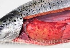 SRS: Analizan patología macroscópica de hepatitis granulomatosa en salmón Atlántico