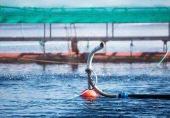 Har sjekka norsk fiskefôr for uønskte stoff