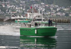 Norsk fiskesjark hylles på CNN
