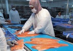 Autoridad rusa desbloquea planta de AquaChile para envíos de salmón