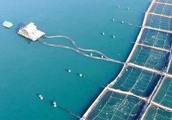 Descartan escape de peces desde centro de cultivo de Aquachile afectado por temporal