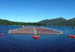 Los Fiordos destaca renovación de acuerdo con la WWF en Reporte de Sustentabilidad 2017