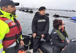SMA ordena Medidas Provisionales a centro de Marine Harvest por fuga masiva de salmones