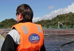 2019: Ingresos de Agrosuper crecerían 52% tras compra de AquaChile