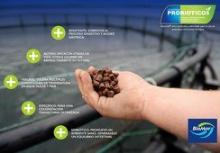 Biomar incorpora probióticos en dietas para etapa de agua de mar