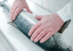 Scottish Sea farms got approval for a new salmon farm