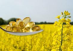 EE.UU. aprueba siembra de canola transgénica alta en omega-3