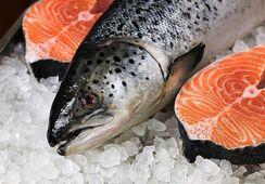 Agosto: Volumen de envíos de salmón a EE.UU. aumenta en 23%