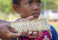 'Fish key to combating world hunger crisis'