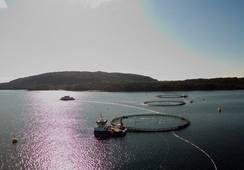 Eide Fjordbruk vil utvide lokalitet