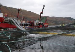 Marine Harvest orders Scotland's biggest Hydrolicer