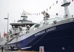 - Skal starte slakting på «Norwegian Gannet» om tre uker