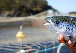 Insect meal has 'high potential' say researchers after salmon feed trial