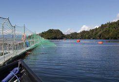 Chilean MPs to vote on salmon farm sediment law