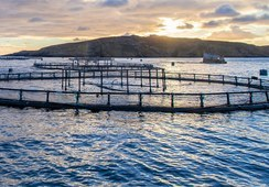 Salmon farming 'may fall $4.1bn short by 2025'
