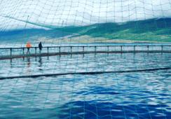 Vellykket emisjon for Ice Fish Farm