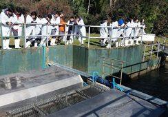 Araucanía: Instalaciones salmonicultoras no han sido afectadas por incendios