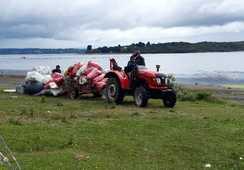 SalmonChile realiza limpieza de playa en Chiloé
