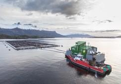 Magallanes: Salmonicultoras reforzarán su plan contra el BKD