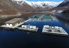 Kan oppdrett i lukkede merder gi bedre fiskevelferd?